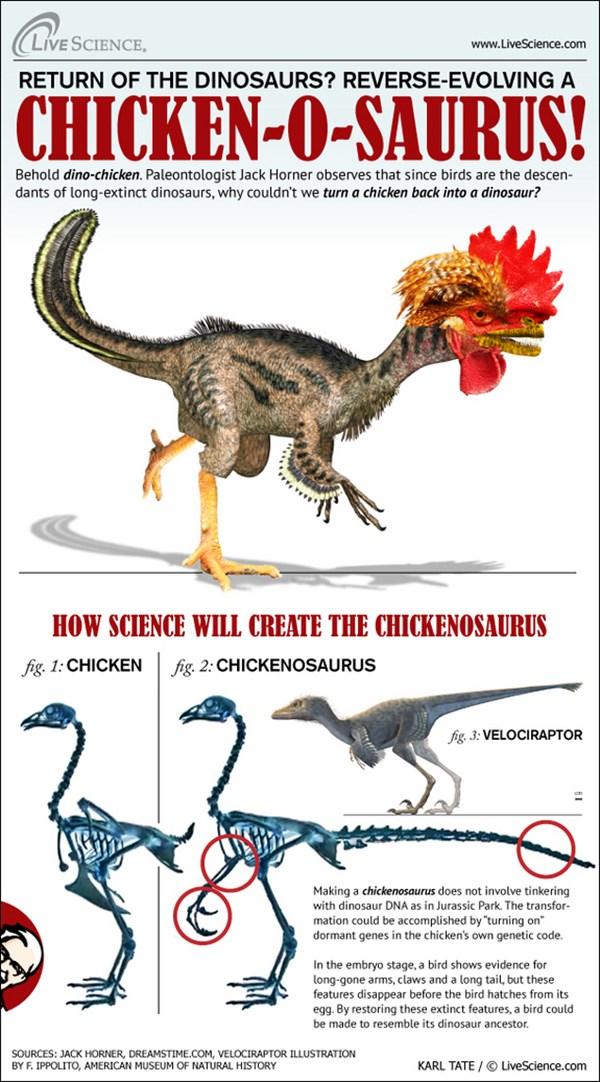 ディノ・チキン! 鶏から恐竜を作る研究。恐竜のような頭部を作ることに成功!