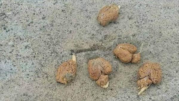 アメリカの小さな村で、道端に転がった9つの脳みそが見つかる!!
