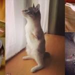 生まれつきの前足の無い子猫のルー ネット上でアイドル的人気に!!