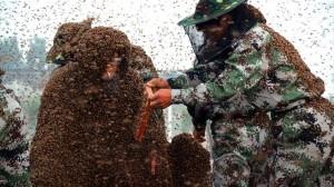 2000ヵ所刺されるも、110万匹の蜂を体にくっつけギネス認定!!
