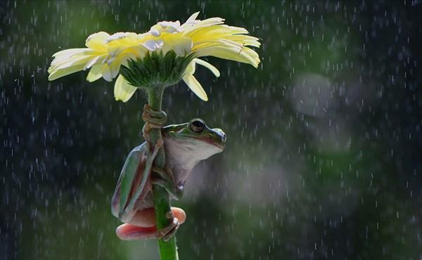 自然の傘で雨宿りをする様々な生き物たち! 画像20枚!