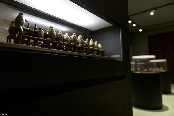 死んだカエルを展示する「カエル博物館」 悪趣味だがちょっと面白そう