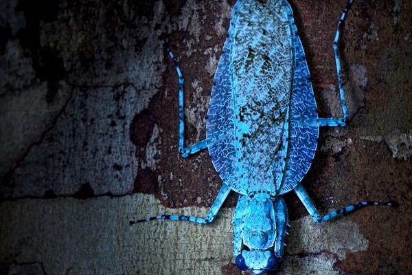 エキゾチックな生き物を、紫外線蛍光撮影するとさらにエキゾチックに!