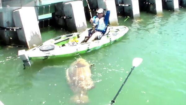 動画アップ後4日で220万再生! カヤックで釣りをしていたら超巨大魚が!