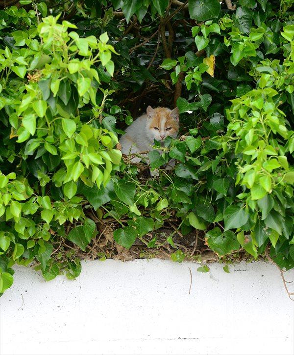 鳥もビックリ! 4匹の子猫のために、木の上に巣をつくった母猫