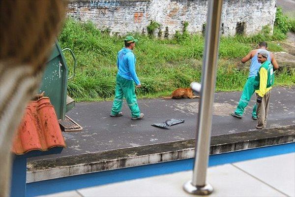 ゴミ収集車にケガした犬を投げ込んだ収集員「犬のためにやった」と言い訳をする