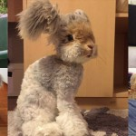 ウサギ界の新アイドル! 翼のような長い耳を持つウサギのウォーリーくん!!