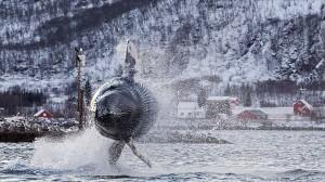 迫力のブリーチング! 40トンのザトウクジラが披露したアクロバットダイブ!