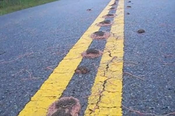 テキサス州の道路に大量のミミズボール! まるでパスタのようだと専門家も困惑