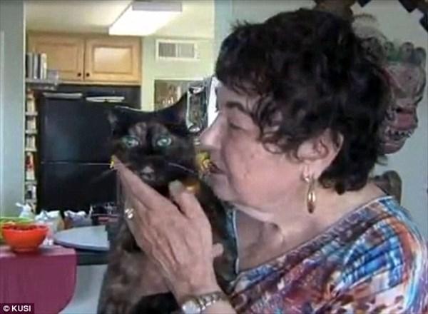 世界最長寿の猫ティファニー 27歳の誕生日を迎えた2ヶ月後に老衰で亡くなる