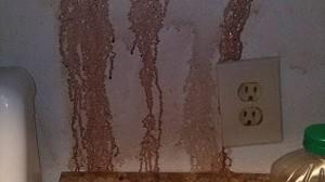 壁から染み出る赤茶色のシミ その正体は、上の階の腐乱死体から流れた出た血液