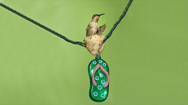 何故そんな所に!? 変な所に巣をつくった鳥たちの画像25選!!