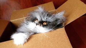 猫なのに狼!? 狼男症候群(多毛症)と診断された世界初の猫がワイルド!!