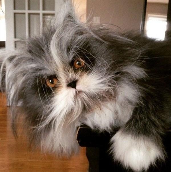 猫なのにオオカミ!? オオカミ男症候群(多毛症)の猫がワイルド!!