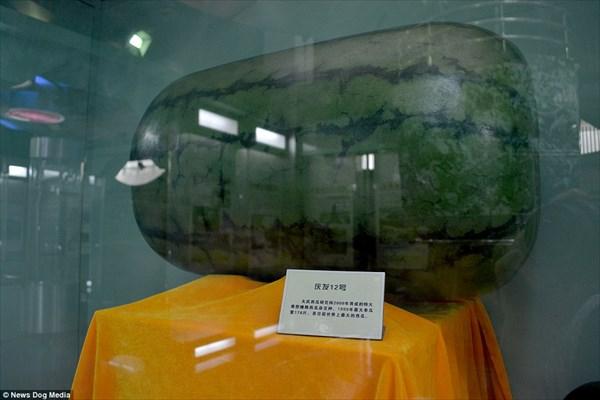 展示物はスイカだけ!中国のスイカ博物館! ただし本物のスイカは置いてない