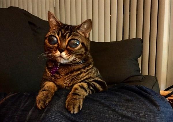 大きな目が不気味だが人気者!? エイリアン猫の「マチルダ」