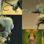 もはや地球外生物! スーパーマクロ撮影による虫たちの肖像画 写真16枚!