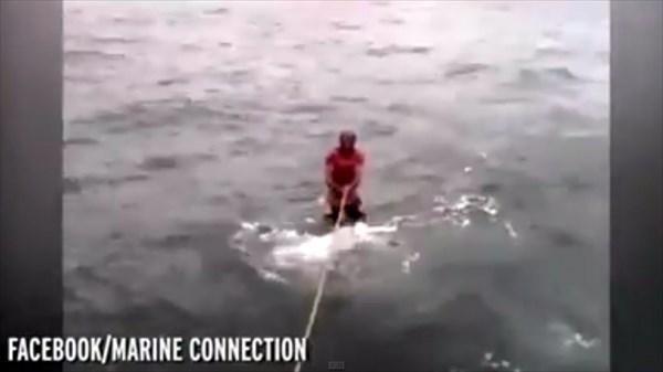 ジンベエザメに乗って水上スキーをする男性! 動物専門家らは避難!!