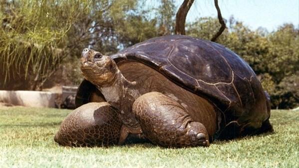 推定年齢150歳以上のガラパゴスゾウガメ、サンディエゴの動物園で永眠