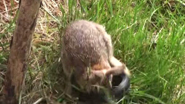 5日間で200万再生の動画! 母ウサギが子を襲ったヘビを一方的にシバキ倒す