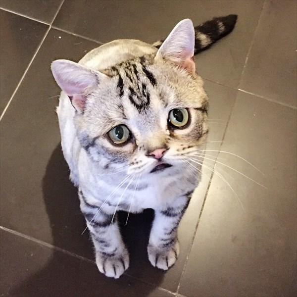 世界一悲しそうな猫!? 悲しそうな顔を持つ子猫のルフちゃん!!