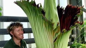 死体の臭いがする! イギリスで世界最大の花ショクダイオオコンニャク開花!!