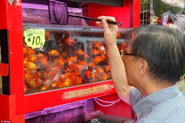 袋詰め!過剰飼育! 中国香港の金魚市場がぎゅうぎゅう過ぎる!
