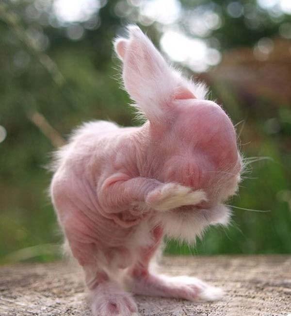 脱毛症や皮膚病、遺伝疾患など 様々な理由で体毛を失った20種の動物達!!