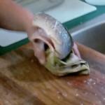 捌かれて、頭と内臓を取り除かれた魚 まな板の上で暴れまわる!!
