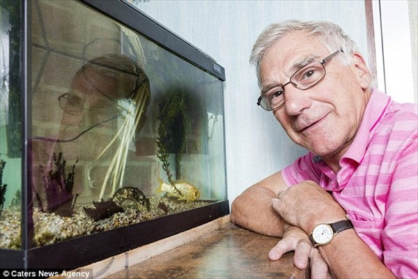 最高齢金魚のスプラッシュ! なんと38歳の誕生日を迎える!!