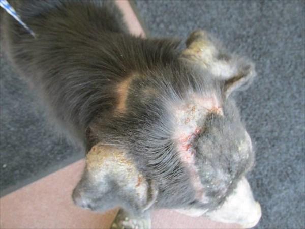 犬・猫アレルギーだけじゃ無い! 人間に対する「ヒト・アレルギー」を持った犬