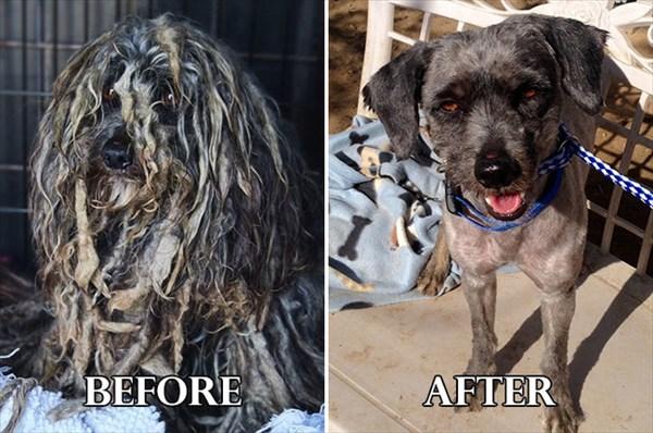 野良や虐待から救われた20匹の犬・・・ ビフォーアフター画像!