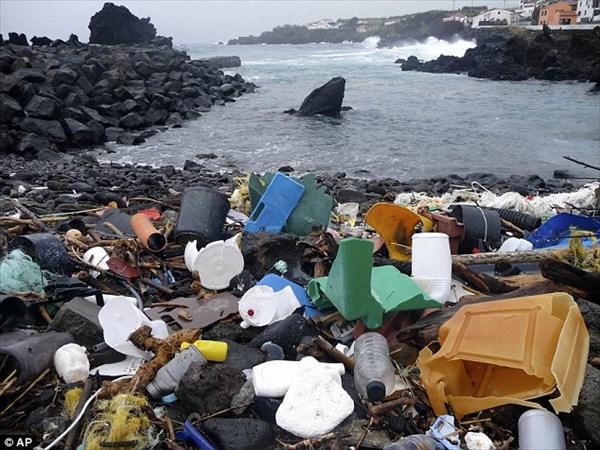 プラスチックによる海洋汚染はプランクトンにまで及ぶ! 世界で初めて撮影!