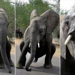 赤ちゃんゾウがブレイクダンス!?観光客に披露したゾウの見事なパフォーマンス
