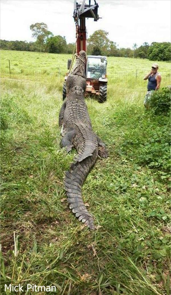 元密猟者で現在クロコダイルハンター 世界最大のワニを探すミック・ピットマン