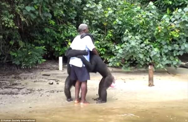ウイルス研究所が動物実験に使ったチンパンジーを残して放棄した島「猿の島」