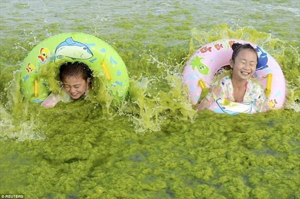 今年も中国のビーチで「アオサ」が大量発生! 緑の海岸とそれを楽しむ行楽客