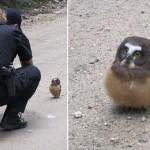 パトロール中の保安官、人間に動じないヒメキンメフクロウの赤ちゃんと出会う