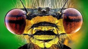 普通のカメラでここまで撮れる! エイリアンのような昆虫クローズアップ写真