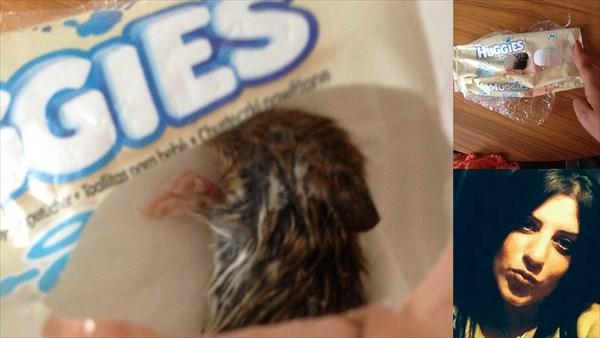赤ちゃん用おしり拭きから出てきたものは、潰れたネズミの死骸・・・