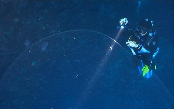 直径4メートルの謎のゲル状の物体 その正体はイカの卵!?