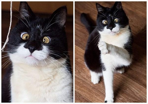 時々脱走するイタズラ好きな猫 寄り目ネコの「オジー」