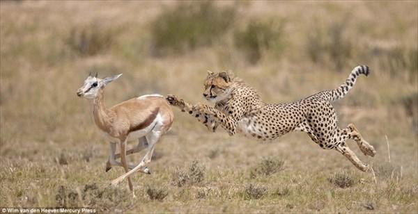 ウィム・ファンデンヘーバーが撮影した息を飲む動物たちの写真