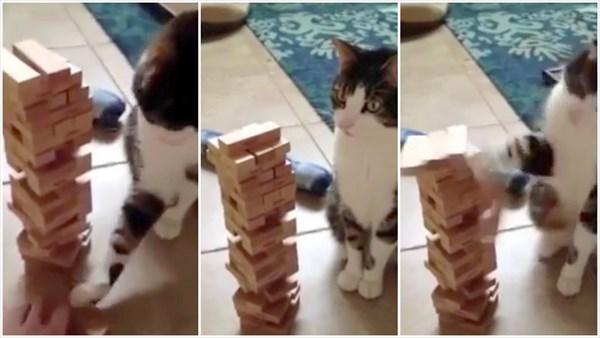 超器用! 飼い主とジェンガをする猫!!