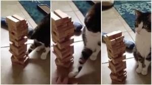 超器用! 飼い主とジェンガをする猫!! そして最後は怒りのクラッシュ!
