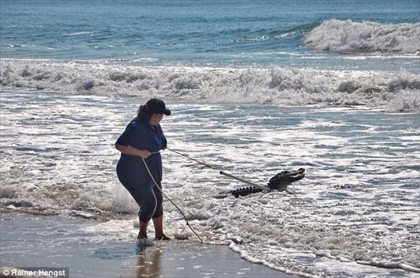サウスカロライナ州のビーチにワニ出現! 海水浴客が見守る中の捕獲劇!!