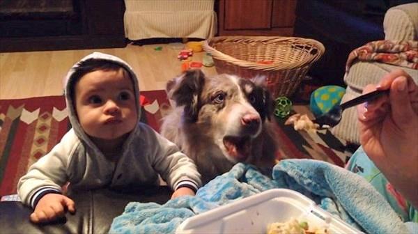 赤ちゃんに「ママ」と言葉を教えていたら、隣にいた犬が「ママ」と話す!
