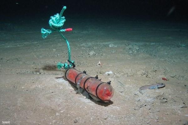 深海4500メートルの海底からクジラの死骸を食べるヨコエビの新種発見!