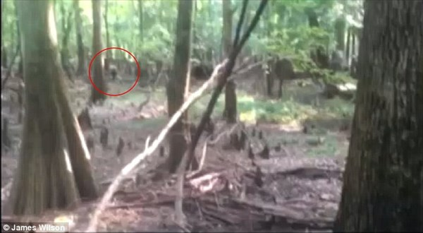サウスカロライナでUMA「トカゲ男」の撮影成功! キグルミ臭がハンパない!