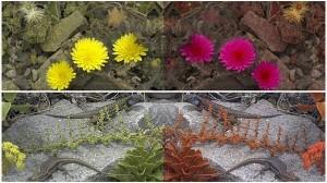 多くの生物にとってタンポポは黄色じゃない? 虫や蛇のビジョンに変換するソフト